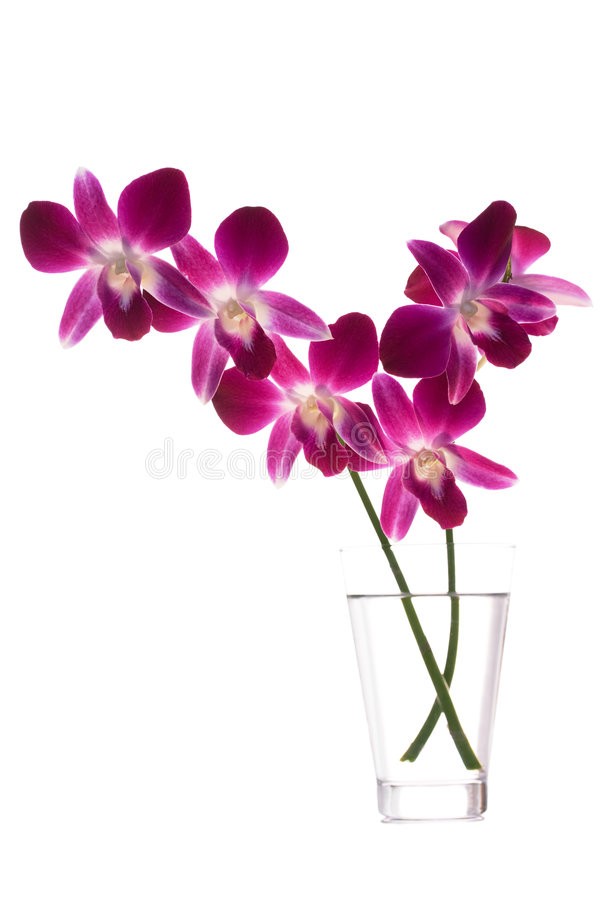 Orquídeas fotos de stock royalty free