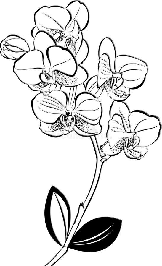 orquídeas ilustración del vector