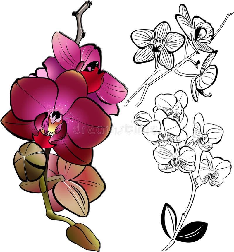 orquídeas libre illustration