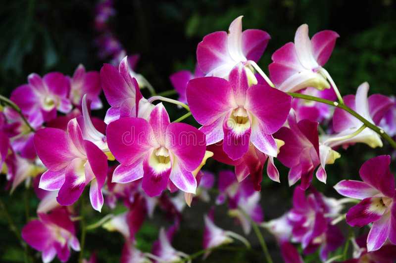 Orquídeas imagem de stock royalty free