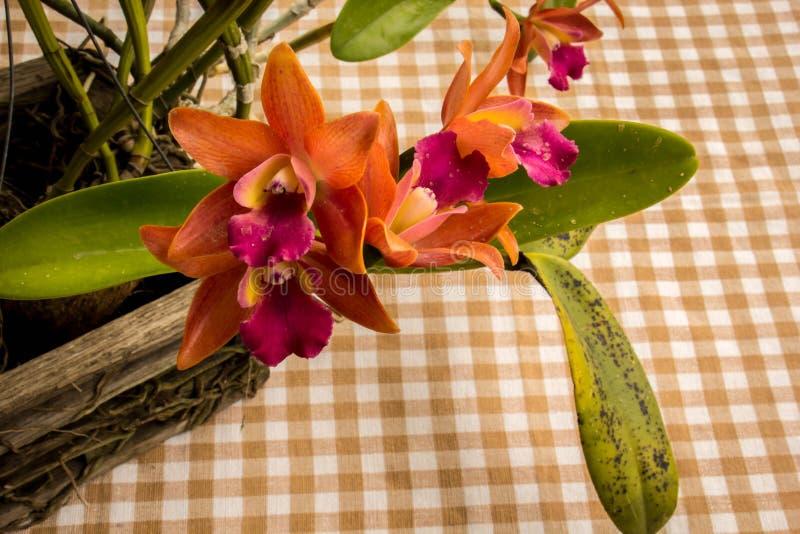 Orquídeas alaranjadas na tabela no estilo do vintage imagem de stock royalty free