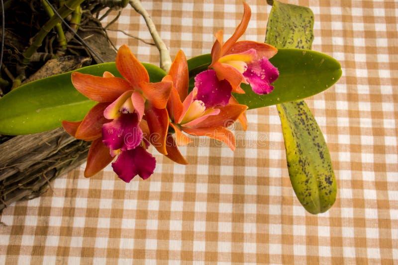 Orquídeas alaranjadas na tabela no estilo do vintage fotografia de stock royalty free