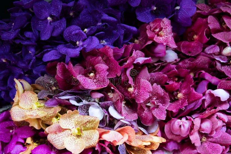 Orquídeas amarillas, púrpuras y rosadas fotografía de archivo