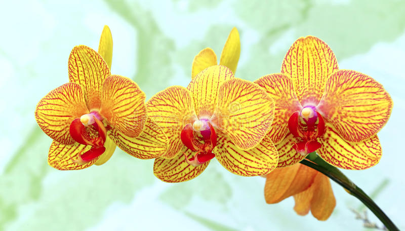 Orquídeas amarillas vibrantes fotografía de archivo