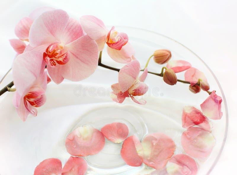 Orquídeas blandas en agua imagenes de archivo