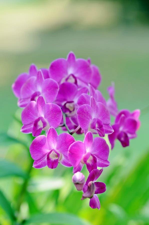 Download Orquídeas bonitas imagem de stock. Imagem de nave, asian - 29829523