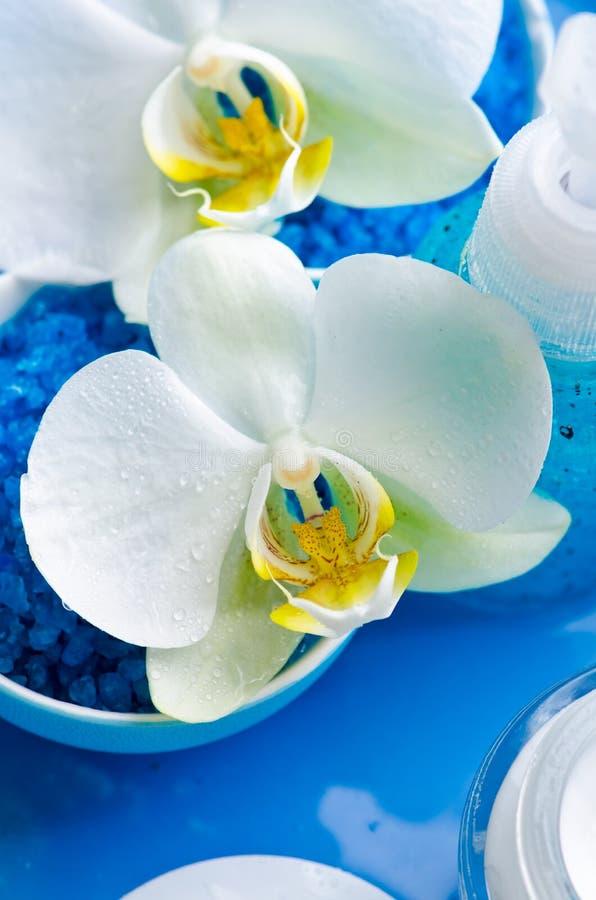 Orquídeas brancas fotos de stock royalty free