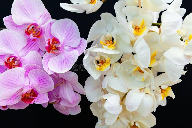 Orquídeas brancas e cor-de-rosa em um fundo preto foto de stock