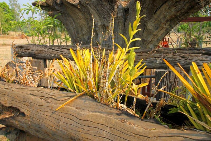 Orquídeas cultivadas no log do coto de árvore fotos de stock