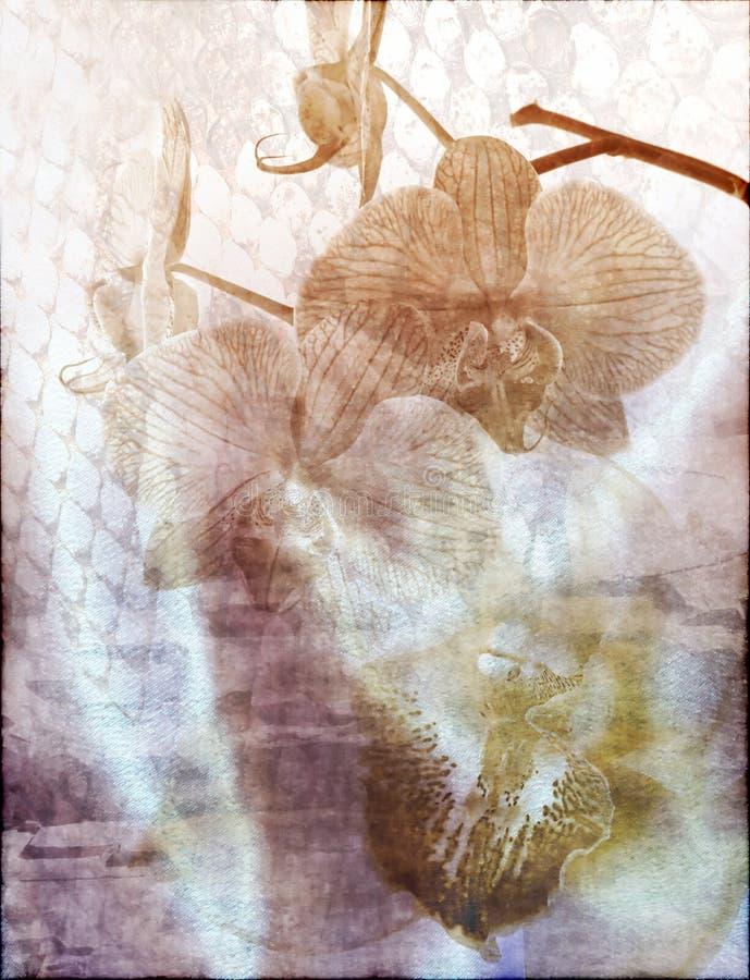 Orquídeas de Grunge fotos de archivo libres de regalías