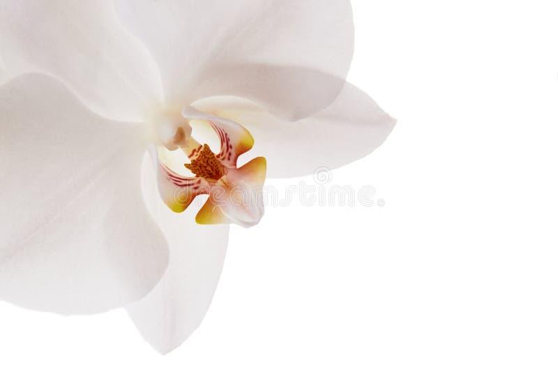 Orquídeas de la flor imágenes de archivo libres de regalías