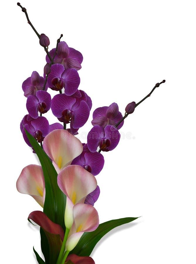 Orquídeas e lírios de Calla ilustração royalty free