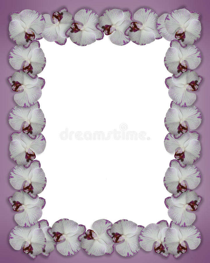 Orquídeas florais da beira roxas ilustração stock