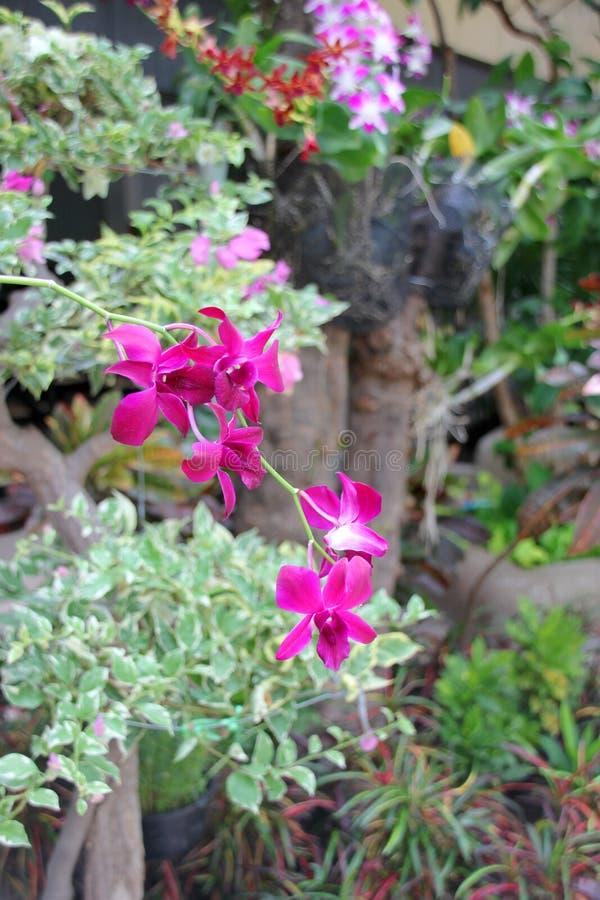 Orquídeas frescas da cor cultivadas na árvore imagem de stock royalty free