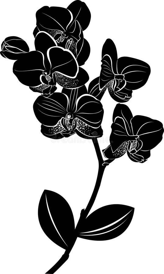 orquídeas Ilustración del vector Orquídeas aisladas en un fondo blanco ilustración del vector
