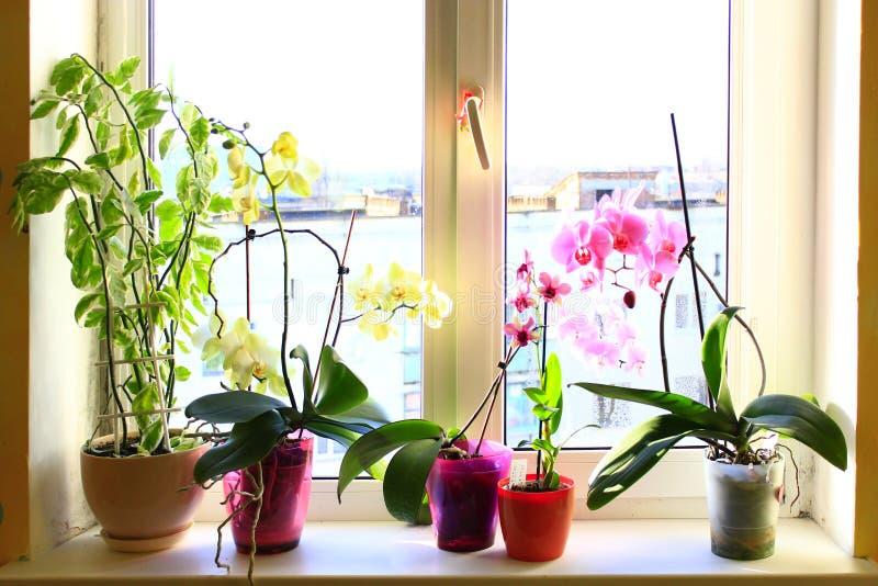 Orquídeas multicoloras florecientes en el ventana-travesaño imagenes de archivo