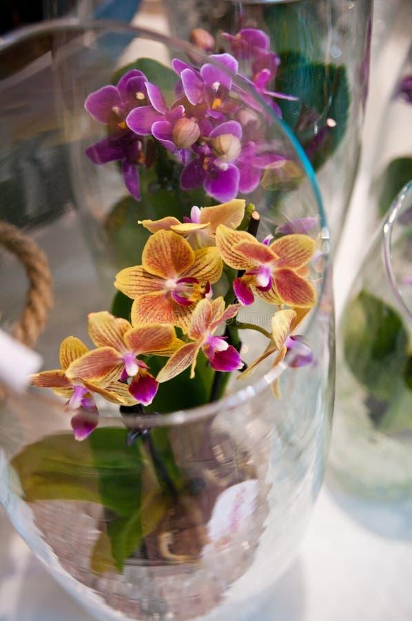 Orquídeas na composição de vidro fotografia de stock