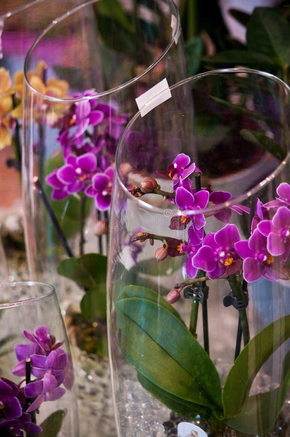 Orquídeas na composição de vidro foto de stock royalty free