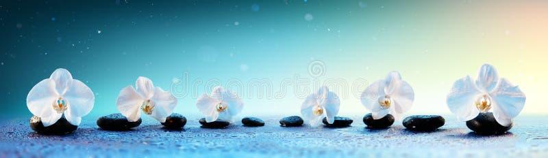 Orquídeas na fileira em pedras dos termas imagens de stock