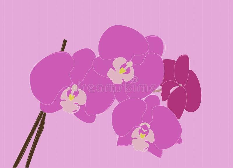 Orquídeas púrpuras libre illustration