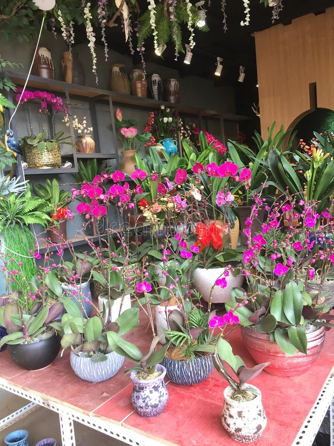 Orquídeas Para La Venta En La Tienda De Flor Fotografía editorial ...