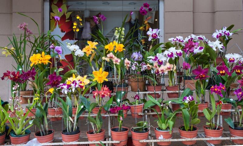 Orquídeas para la venta, mercado callejero en Asuncion, Paraguay. fotos de archivo