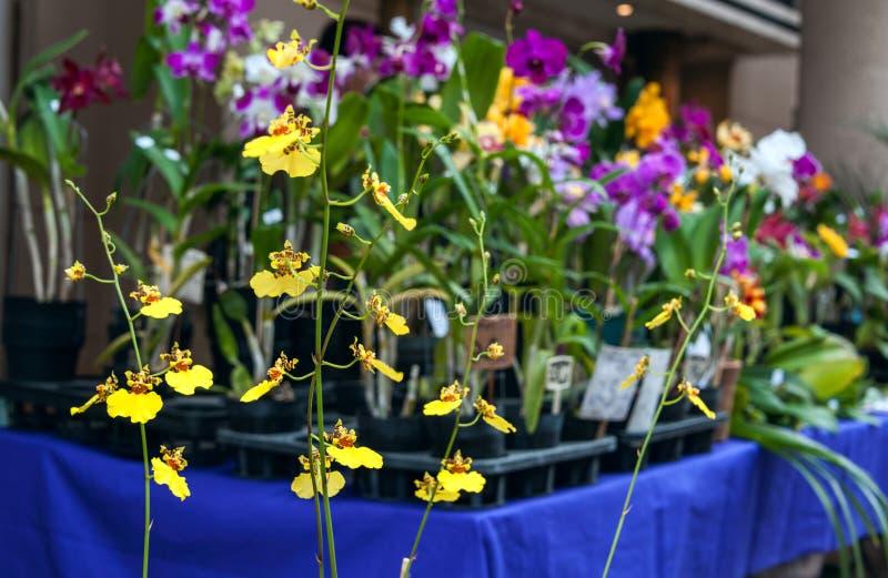 Orquídeas para la venta, mercado callejero en Asuncion, Paraguay. imágenes de archivo libres de regalías