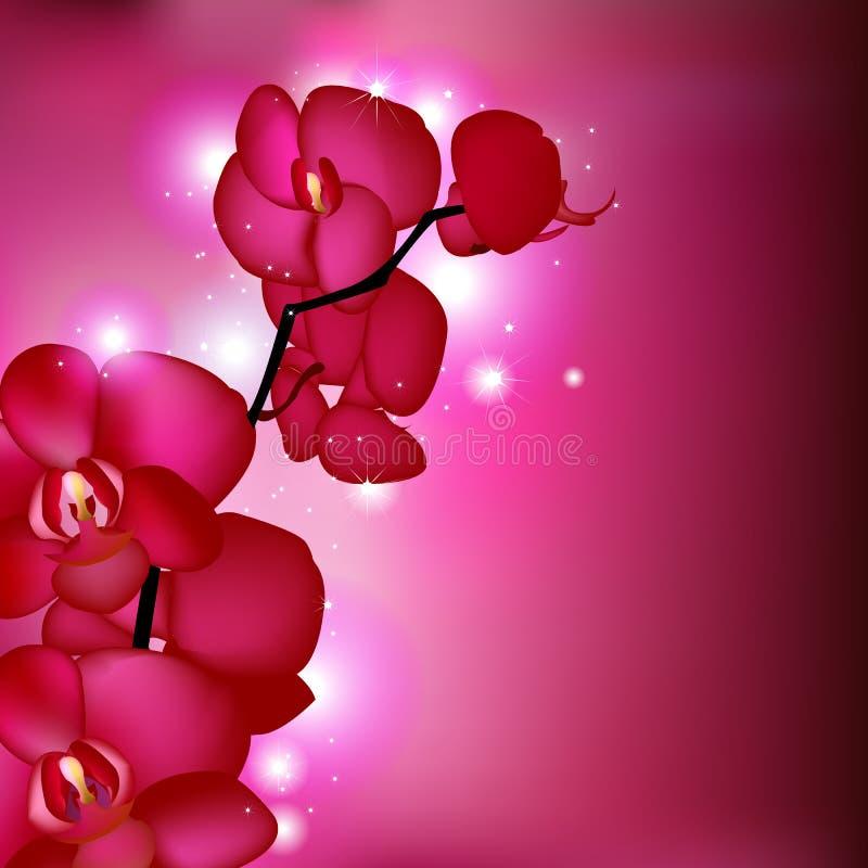Orquídeas rosadas libre illustration