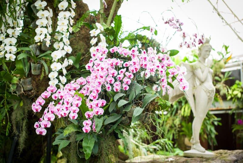 Orquídeas roxas e brancas imagens de stock