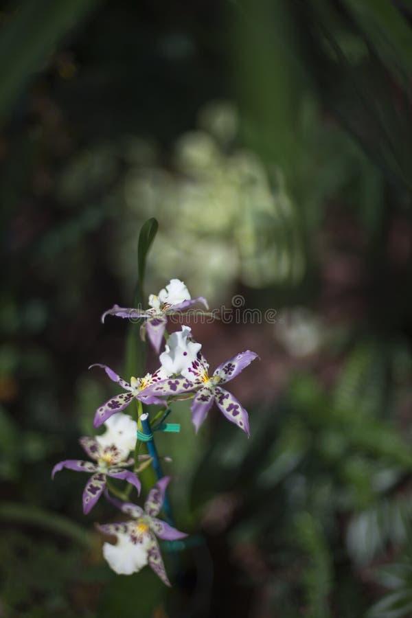 Orquídeas simples fotos de stock