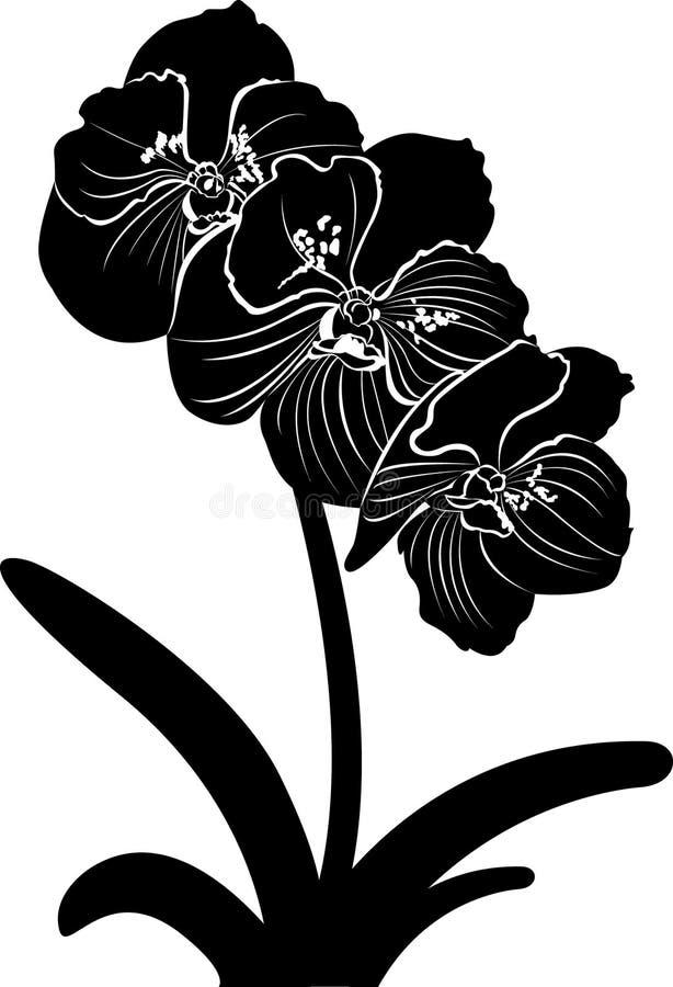 orquídeas Vector de la rama de la flor de la orquídea aislado stock de ilustración