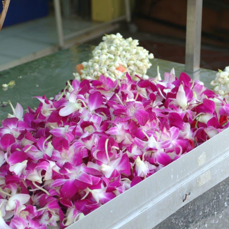 Orquídeas vendidas en Campbell Lane foto de archivo libre de regalías