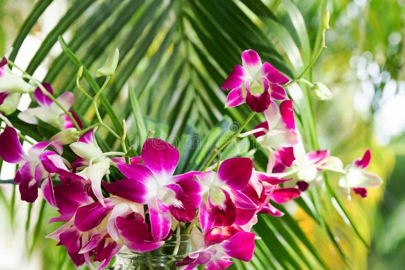 Orqu?dea p?rpura para el dise?o decorativo Fondo floral foto de archivo libre de regalías