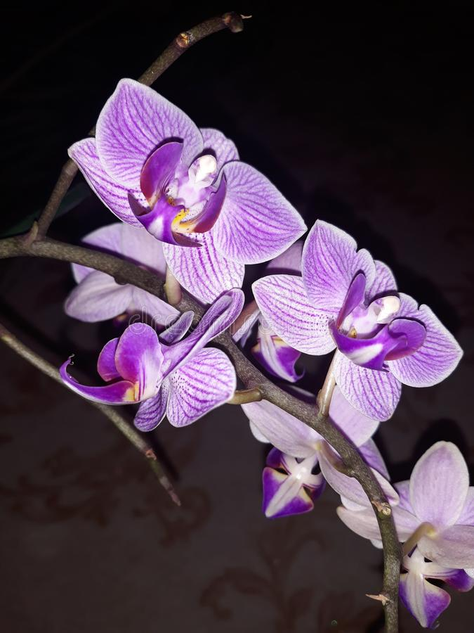 Orqu?dea violeta foto de archivo libre de regalías