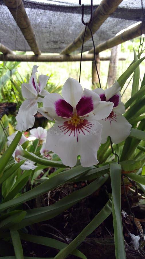 Orquidea stock photos