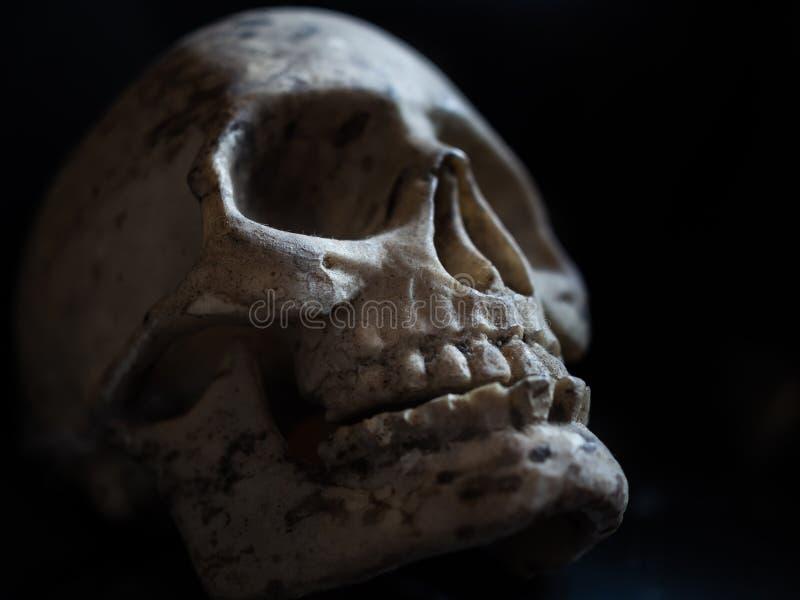 Orrore del cranio immagini stock