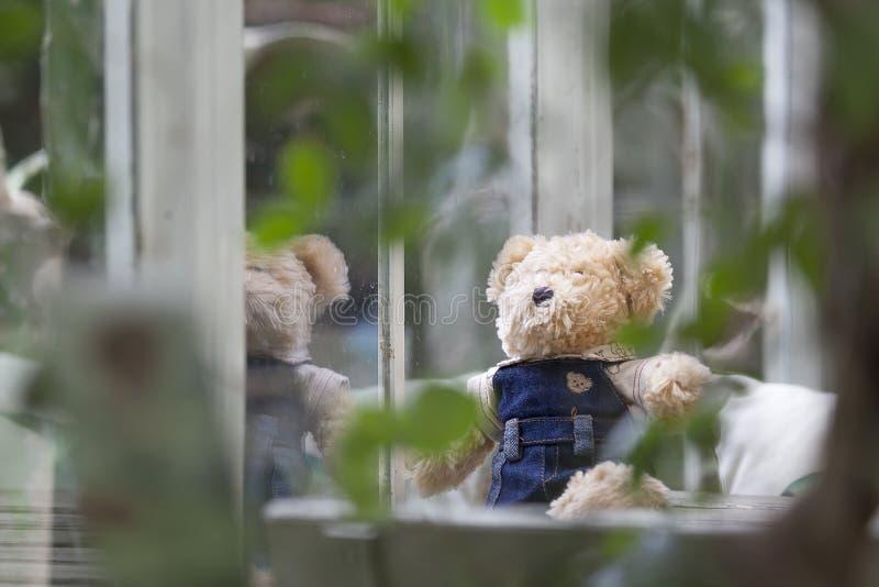 Orsacchiotto solo che si siede e che guarda fuori la finestra immagine stock immagine di cute - Finestra che si apre ...