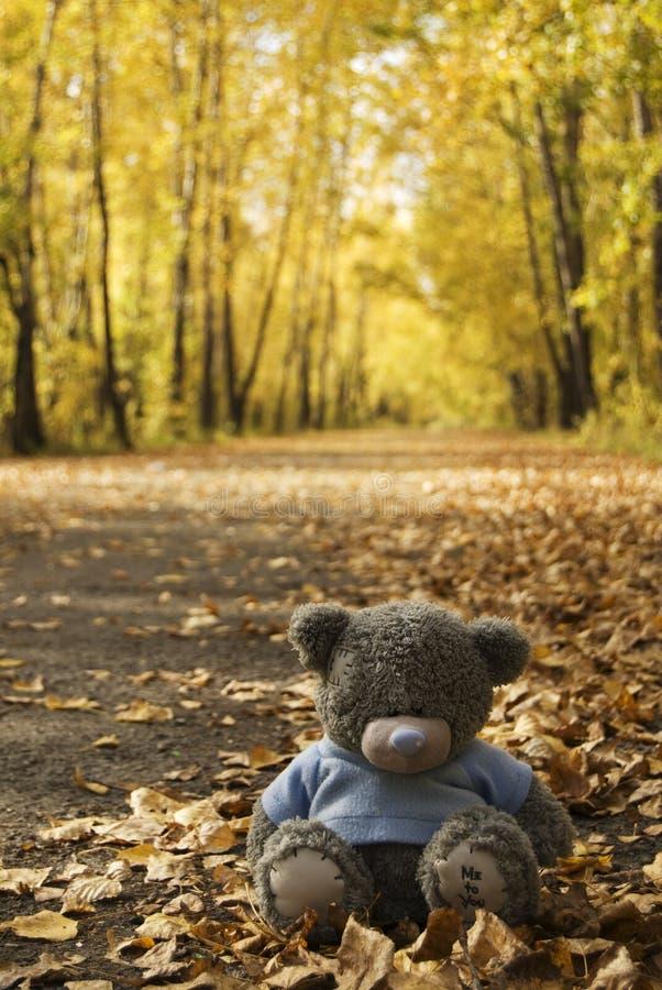 Orso del giocattolo in autunno fotografie stock