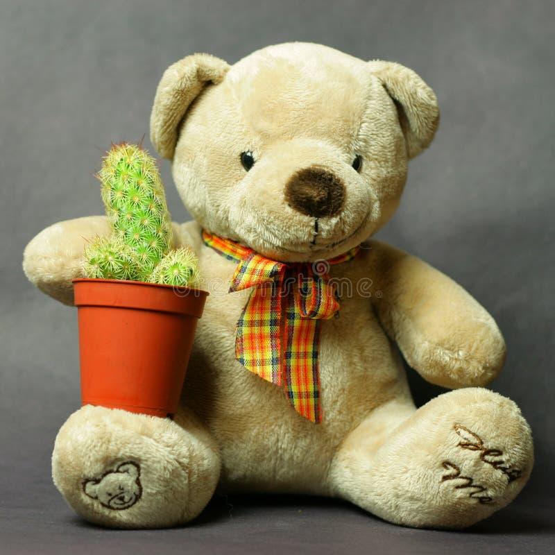Orso dell'orsacchiotto che tiene un mini cactus immagine stock libera da diritti