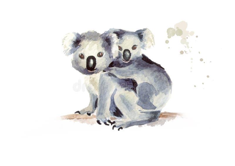 Orso di koala con fare da baby-sitter su un ramo di albero, isolato su fondo bianco Illustrazione disegnata a mano dell'acquerell illustrazione vettoriale
