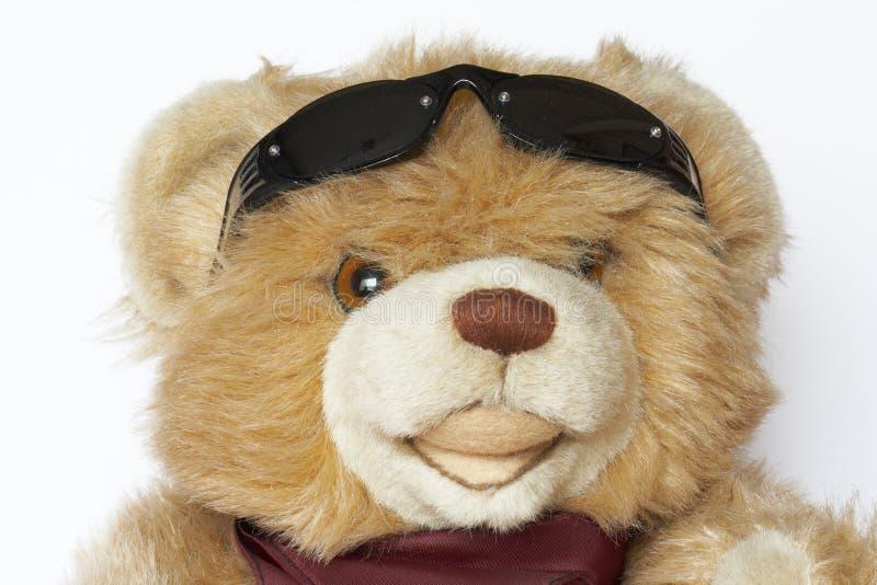 Orso freddo dell'orsacchiotto fotografia stock