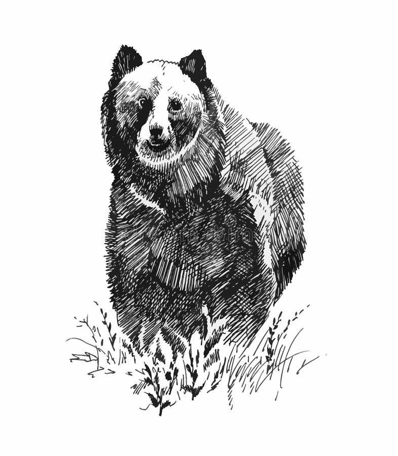 Orso grigio, schizzo disegnato a mano royalty illustrazione gratis