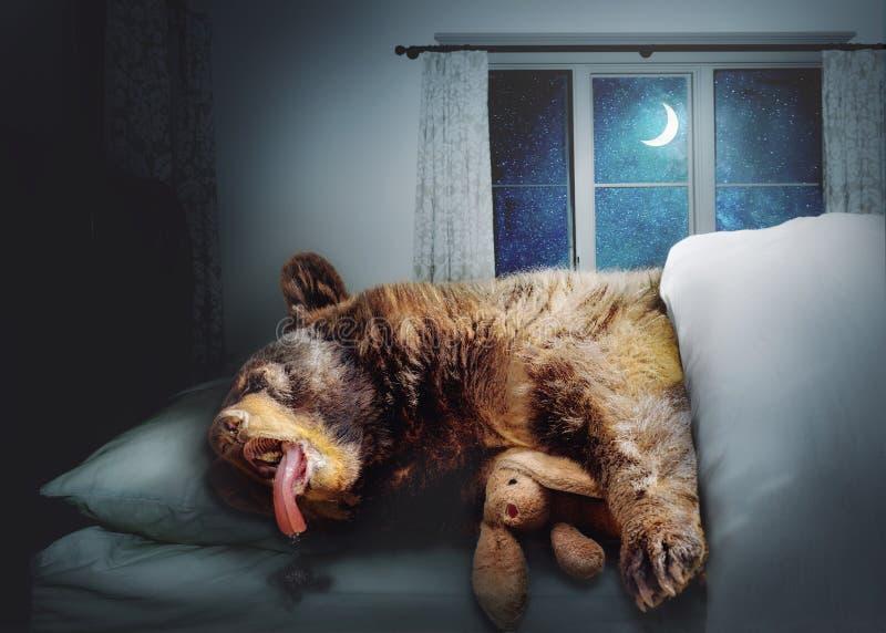 Orso nero divertente Sleepng a letto immagini stock