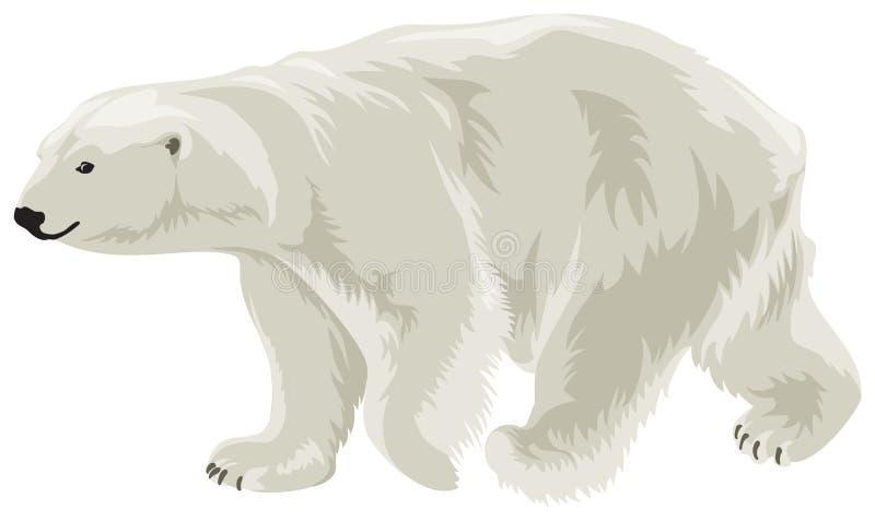 Orso polare dentro   illustrazione vettoriale