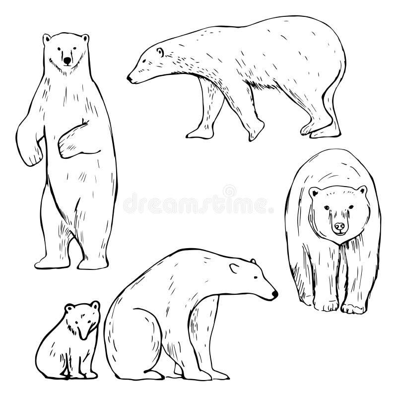Orso polare disegnato a mano Illustrazione di schizzo di vettore illustrazione di stock