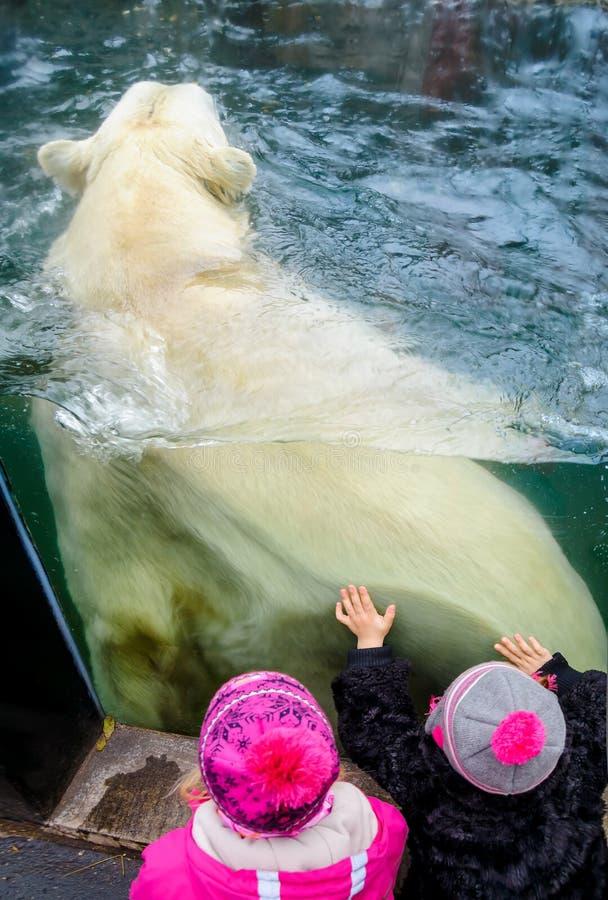 Orso polare nel giardino zoologico di Praga fotografie stock libere da diritti