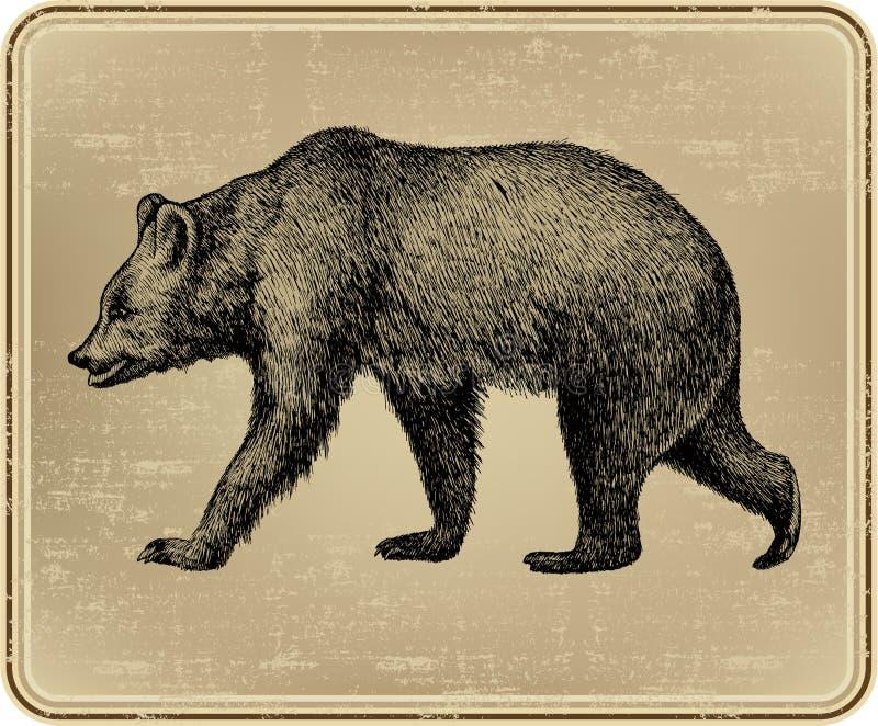 Orso selvaggio animale, a mano disegno. Illustratio di vettore illustrazione di stock