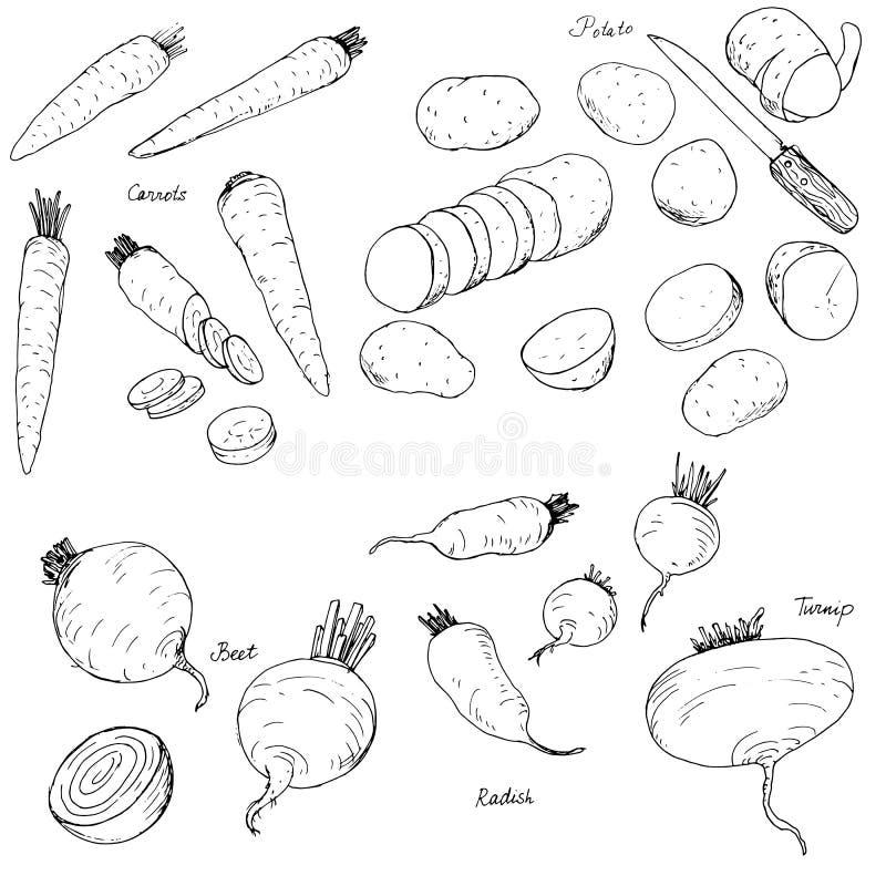 Ortaggi a radici disegnati a mano royalty illustrazione gratis