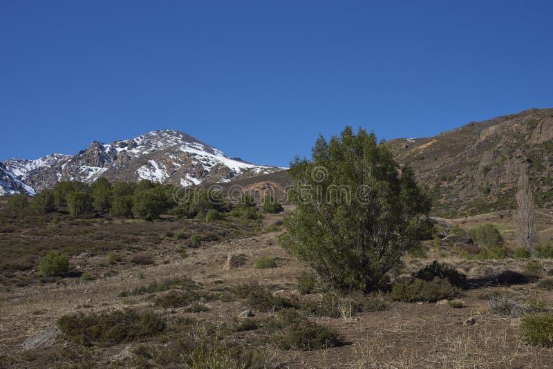 Orte Parque Yerba in Chile lizenzfreies stockbild