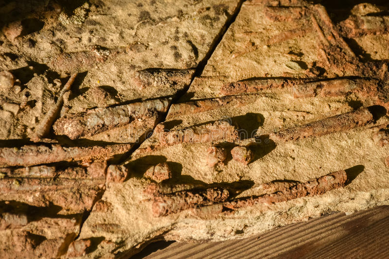 Orthoceras Fossils. In Sandstone Rock royalty free stock image